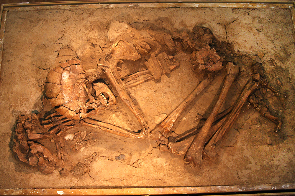 Proto-Neolithic burial remains of what appears to be a woman holding her pet dog, 15,000-11,500 years ago.